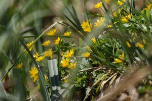 Frühlingsblumen Uckermark